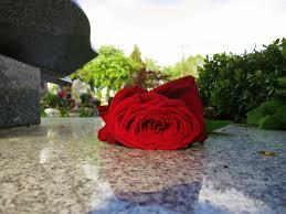C:\Users\AdminX\Desktop\НАТАЛИ\ПАМЯТНИКИ\сайт\материалы для заполнения\статьи\Какие цветы нести на могилу\images.jpg